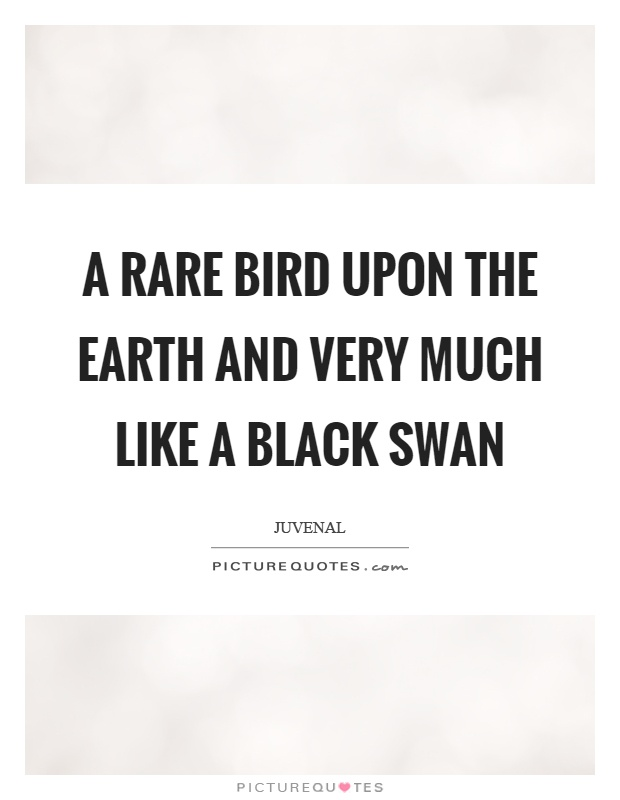A rare bird upon the earth and very much like a black swan Picture Quote #1