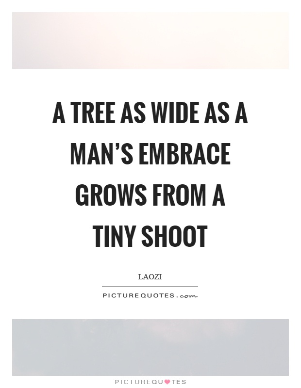 A tree as wide as a man's embrace grows from a tiny shoot Picture Quote #1