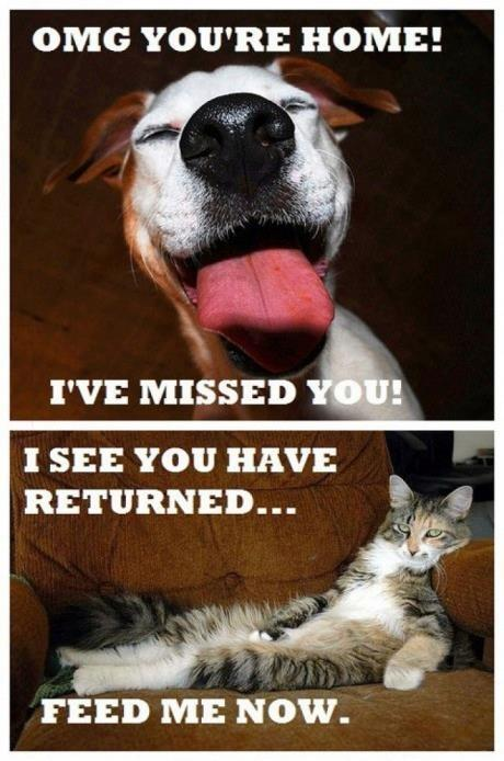OMG you're home! I've missed you! I see you have returned. Feed me now Picture Quote #1