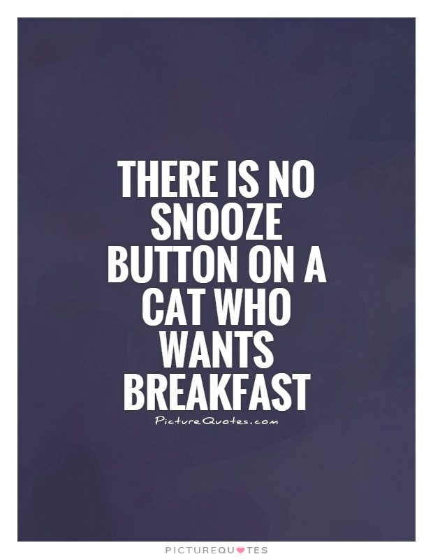 There is no snooze button on a cat who wants breakfast Picture Quote #1