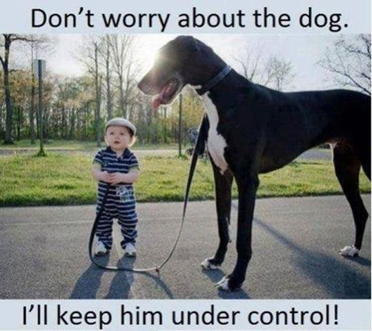 Don't worry about the dog. I'll keep him under control Picture Quote #1
