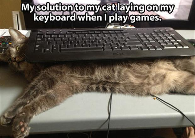 My solution to my cat lying on my keyboard when I play games Picture Quote #1