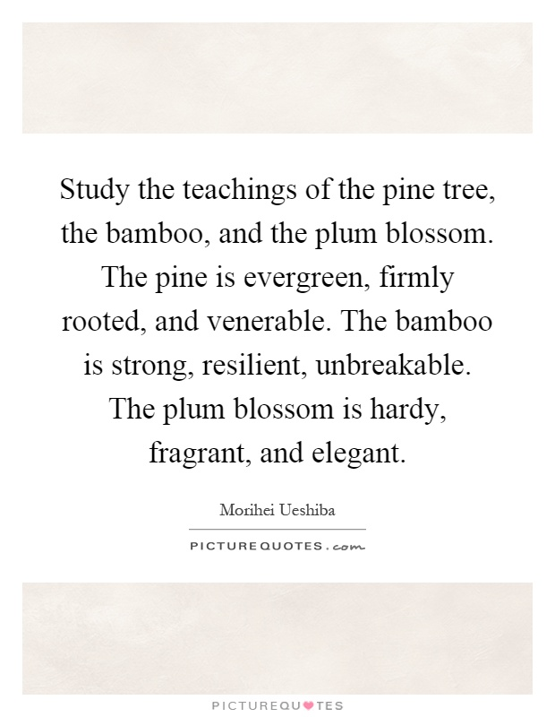 Study the teachings of the pine tree, the bamboo, and the plum blossom. The pine is evergreen, firmly rooted, and venerable. The bamboo is strong, resilient, unbreakable. The plum blossom is hardy, fragrant, and elegant Picture Quote #1