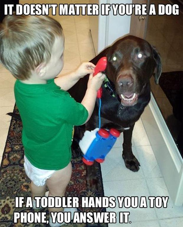It doesn't matter if you're a dog, if a toddler hands you a toy phone, you answer it Picture Quote #1
