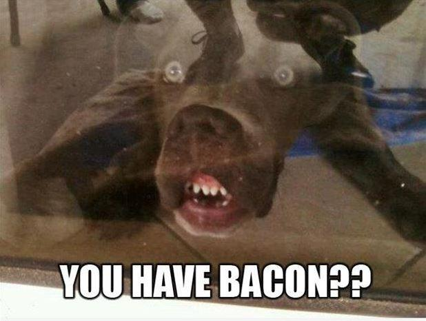 You have bacon? Picture Quote #1