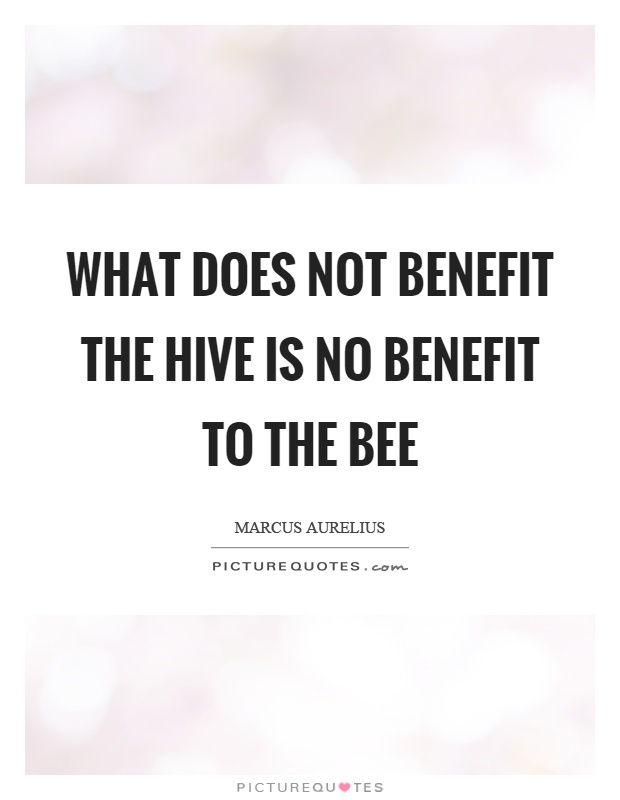 What does not benefit the hive is no benefit to the bee Picture Quote #1