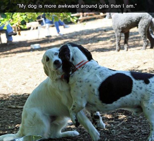 My dog is more awkward around girls than I am Picture Quote #1