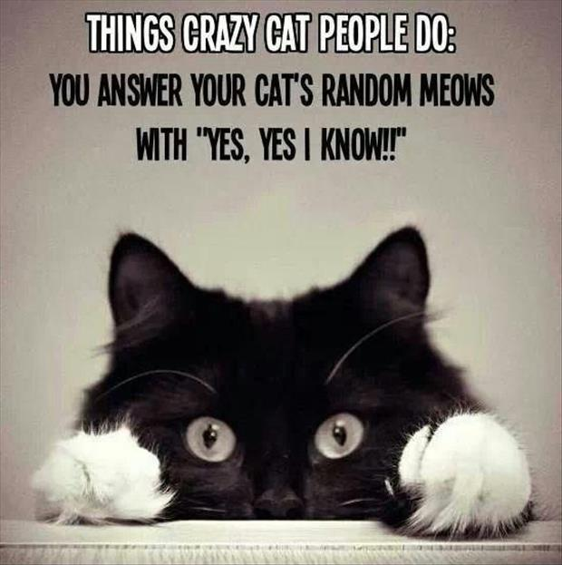 """Things crazy cat people do: You answer your cat's random meows with """"yes, yes I know!!"""" Picture Quote #1"""