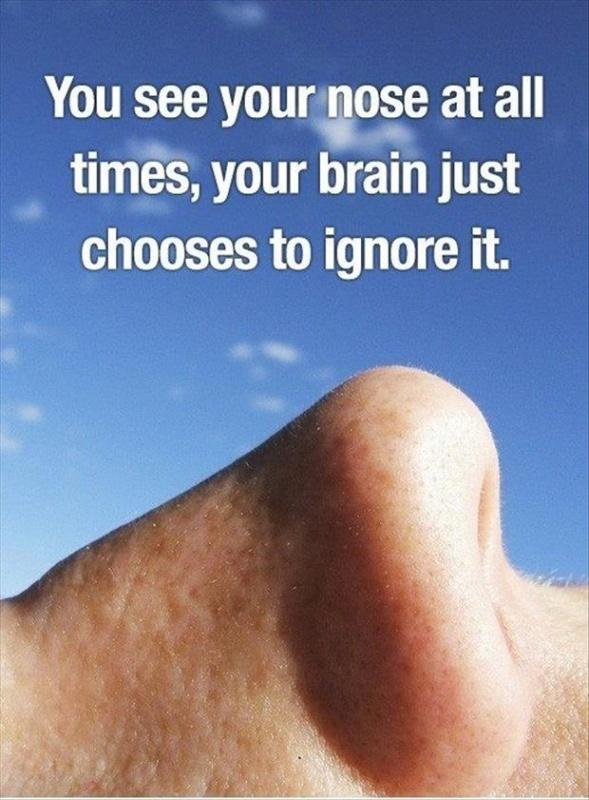 You see your nose at all time, your brain just chooses to ignore it Picture Quote #1