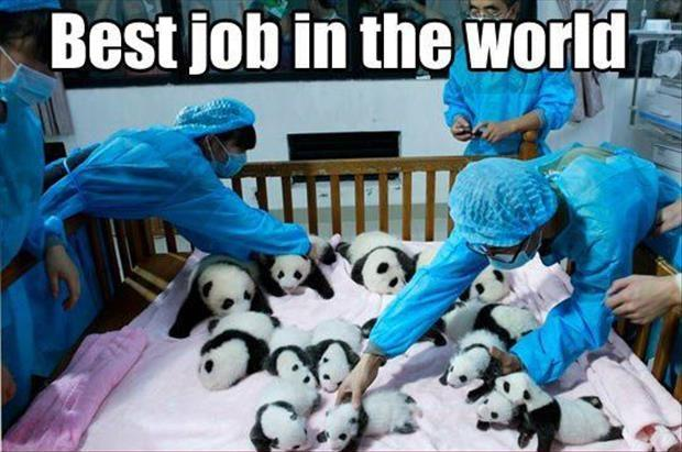 Best job in the world Picture Quote #1