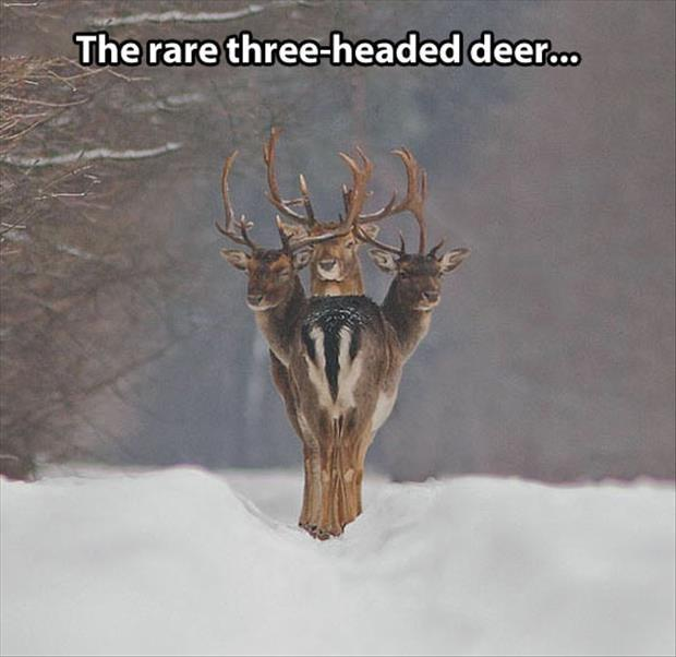The rare three headed deer Picture Quote #1