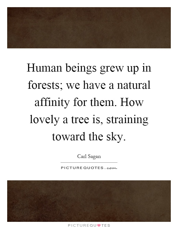 Human beings grew up in forests; we have a natural affinity for them. How lovely a tree is, straining toward the sky Picture Quote #1