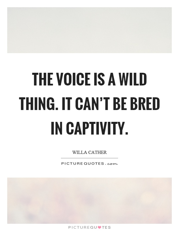 The voice is a wild thing. It can't be bred in captivity Picture Quote #1