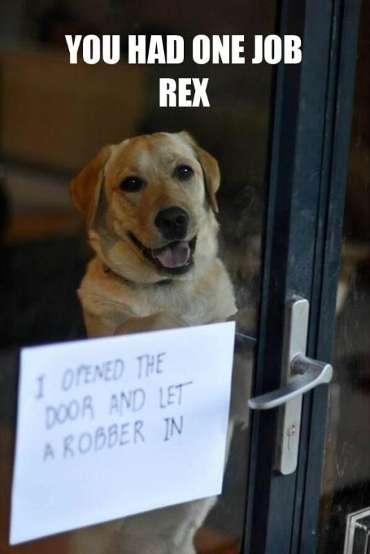 You had one job Rex. I opened the door and let a robber in Picture Quote #1