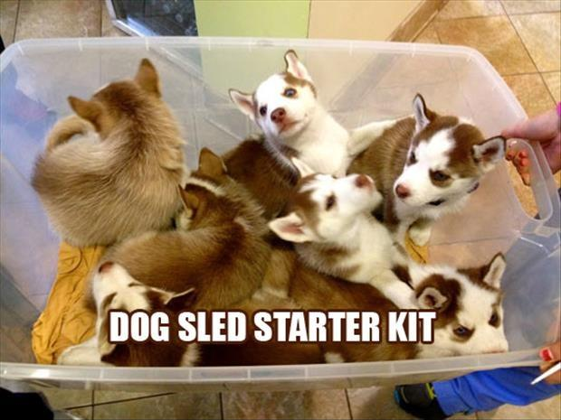 Dog sled starter kit Picture Quote #1