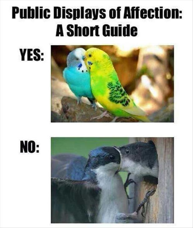Public displays of affection. A short guide. Yes. No Picture Quote #1