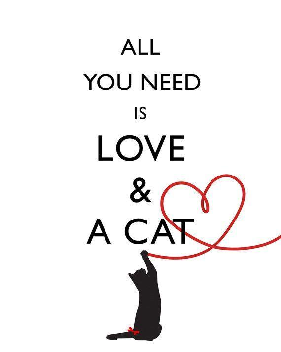 All you need is love and a cat Picture Quote #1