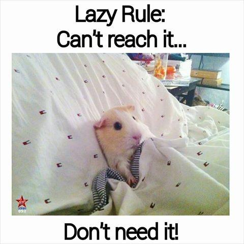 Lazy rule: Can't reach it. Don't need it Picture Quote #2