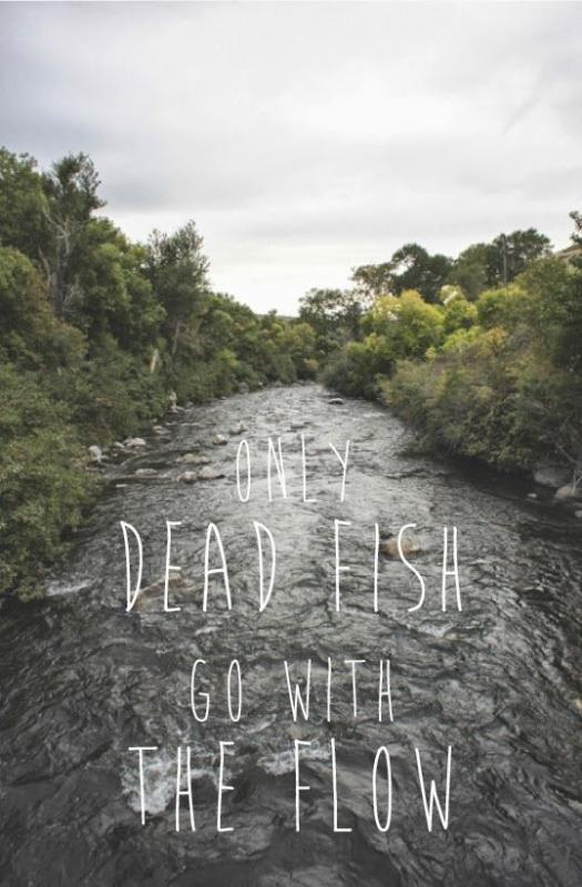Dead fish quotes quotesgram for Only dead fish go with the flow
