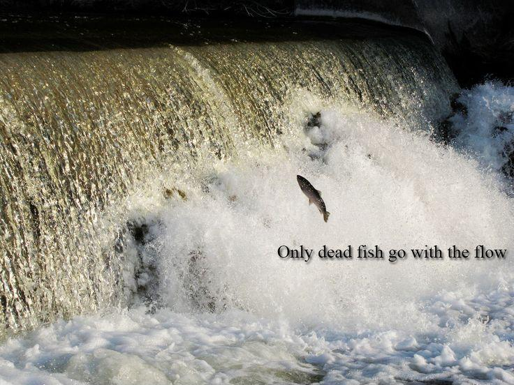 Only dead fish go with the flow Picture Quote #5
