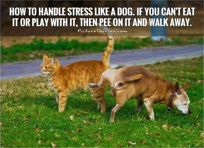 How to handle stress like a dog. If you can't eat it or play with it, then pee on it and walk away Picture Quote #1