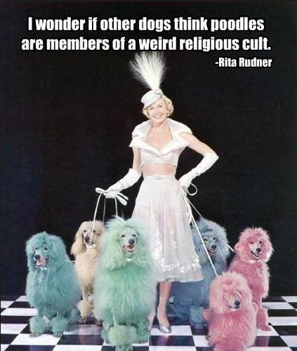 I wonder if other dogs think poodles are members of a weird religious cult Picture Quote #1
