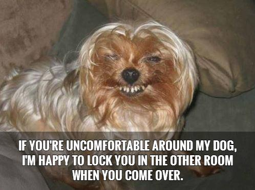 If you're uncomfortable around my dog, I'm happy to lock you in the other room when you come over Picture Quote #1