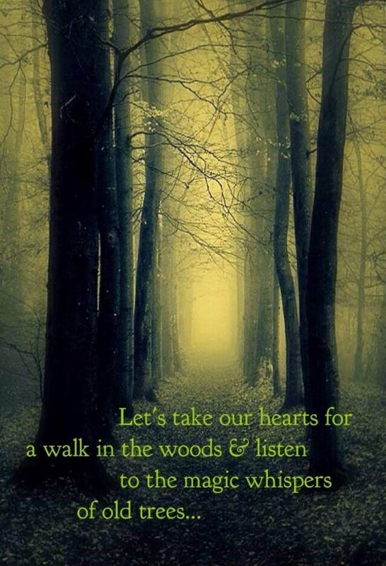 Let's take our hearts for a walk in the woods and listen to the magic whispers of old trees Picture Quote #1