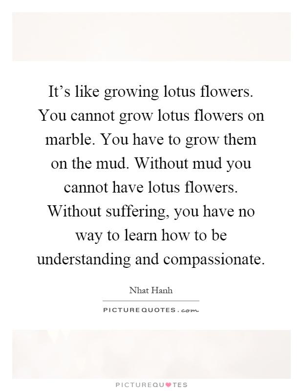 Its Like Growing Lotus Flowers You Cannot Grow Lotus Flowers