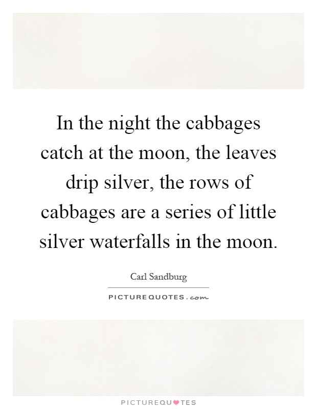 In the night the cabbages catch at the moon, the leaves drip silver, the rows of cabbages are a series of little silver waterfalls in the moon Picture Quote #1