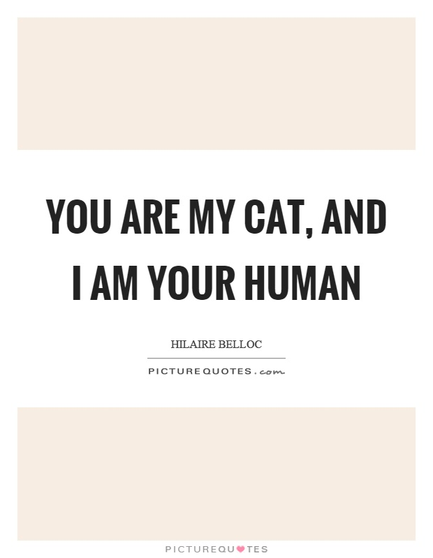 You are my cat, and I am your human Picture Quote #1