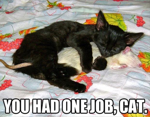 You had one job, cat Picture Quote #1