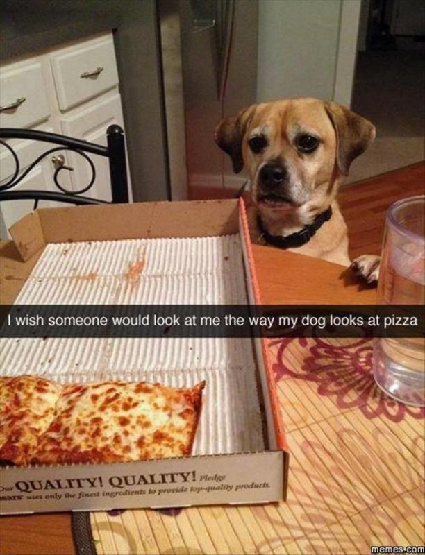 I wish someone would look at me the way my dog looks at pizza Picture Quote #1
