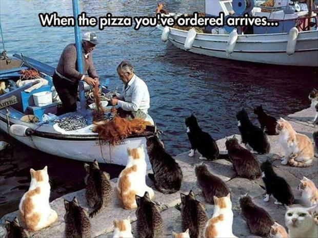 When the pizza you ordered arrives Picture Quote #1