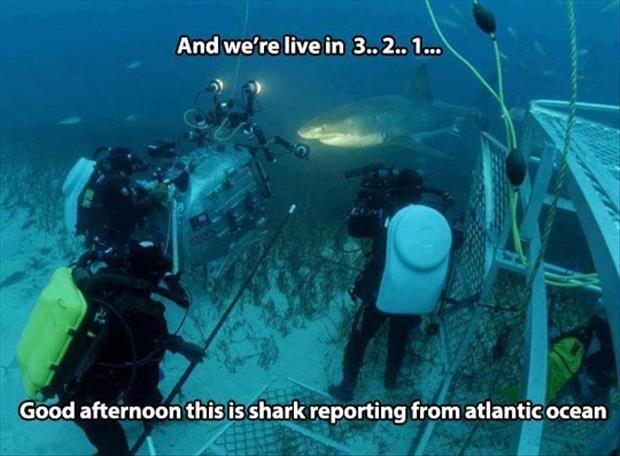 And we're live in 3... 2... 1...  Good afternoon this is shark reporting from Atlantic Ocean Picture Quote #1
