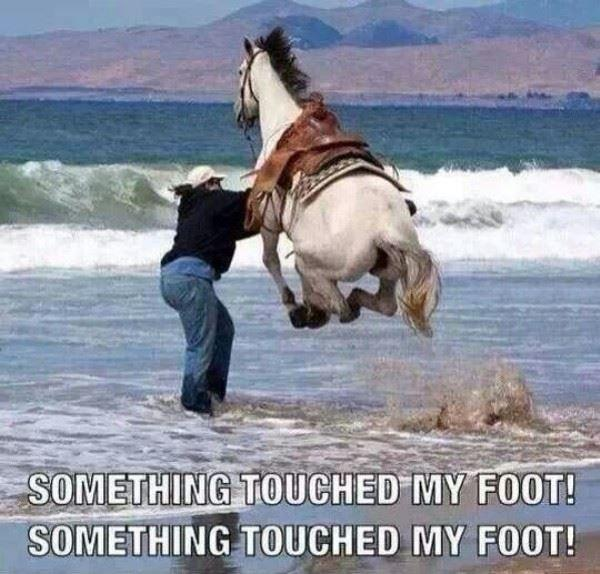 Something touched my foot! something touched my foot! Picture Quote #1
