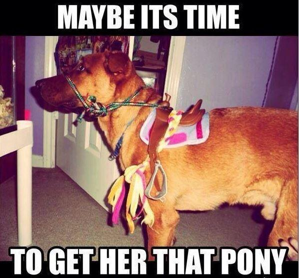 Maybe it's time to get her that pony Picture Quote #1