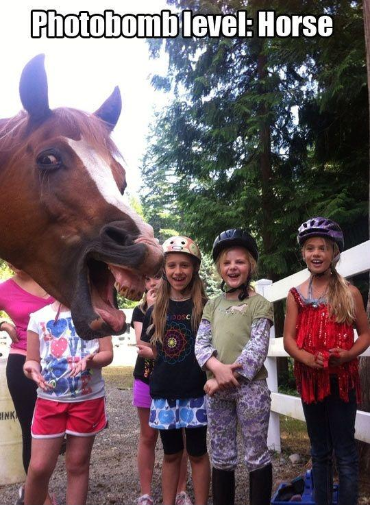 Photobomb level: Horse Picture Quote #1
