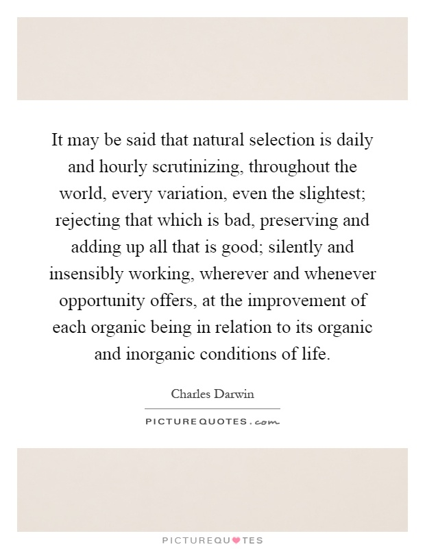 It may be said that natural selection is daily and hourly scrutinizing, throughout the world, every variation, even the slightest; rejecting that which is bad, preserving and adding up all that is good; silently and insensibly working, wherever and whenever opportunity offers, at the improvement of each organic being in relation to its organic and inorganic conditions of life Picture Quote #1