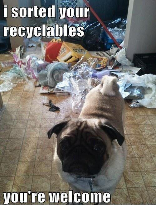 I sorted your recyclables. You're welcome Picture Quote #1