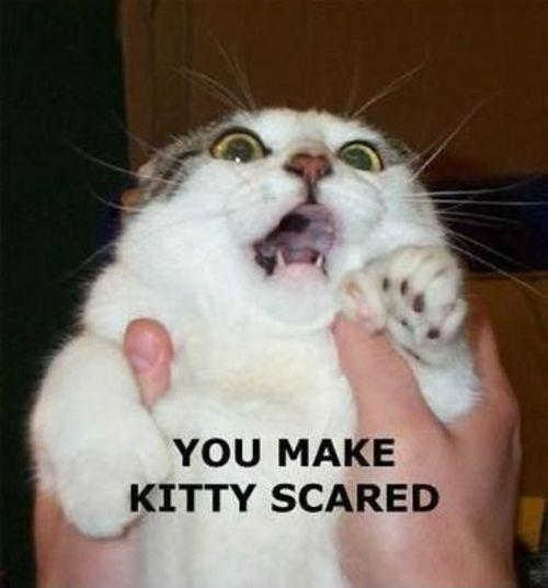 You make kitty scared Picture Quote #1