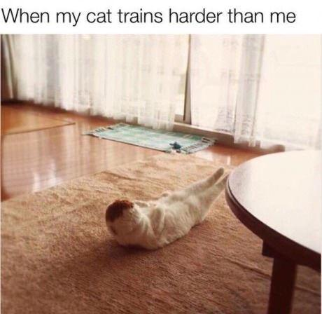 When my cat trains harder than me Picture Quote #1