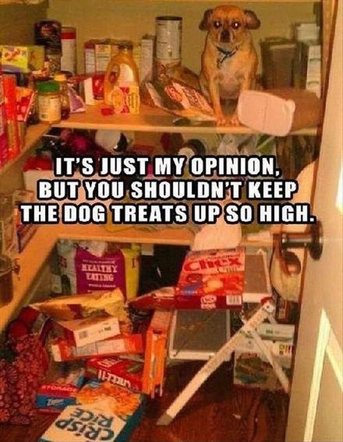 It's just my opinion, but you shouldn't keep the dog treats up so high Picture Quote #1