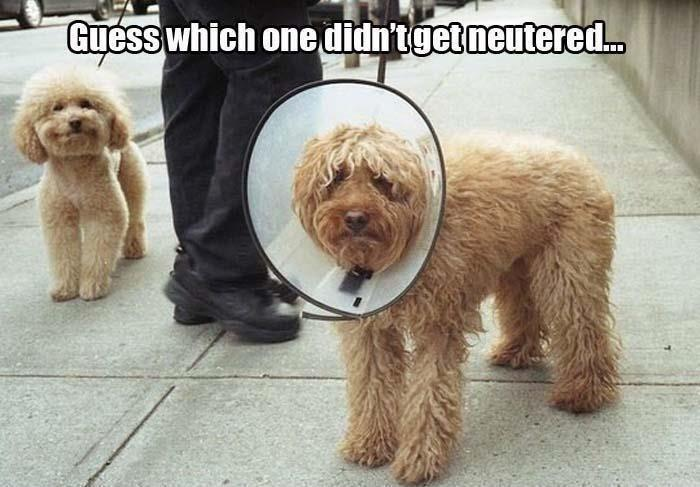 Guess which one didn't get neutered Picture Quote #1