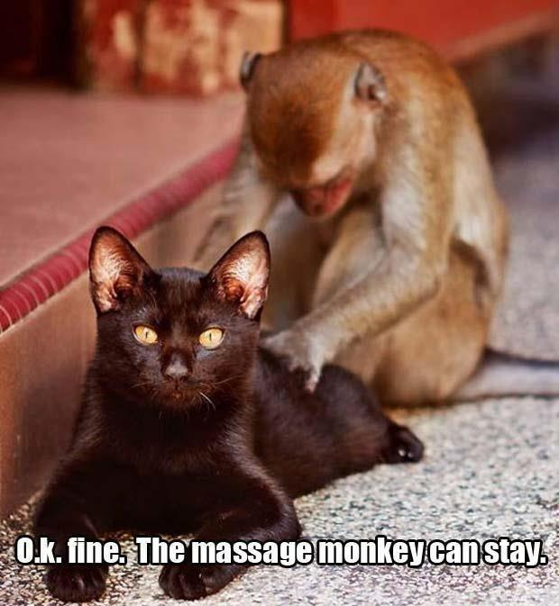 O.k. fine. The massage monkey can stay Picture Quote #1