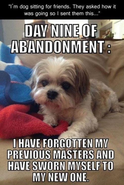 I'm dog sitting for friends. They asked how it was going so I sent them this. Day nine of abandonment: I have forgotten my previous masters and have sworn myself to a new one Picture Quote #1