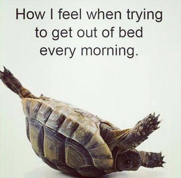 How I feel when trying to get out of bed every morning Picture Quote #1