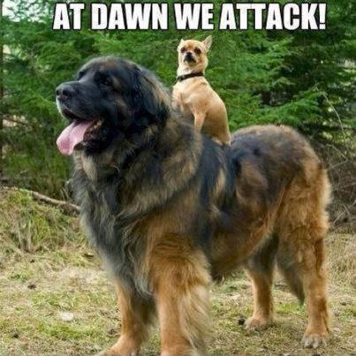 At dawn we attack Picture Quote #1