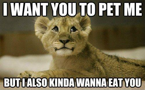 I want you to pet me, but I also kinda wanna eat you Picture Quote #1