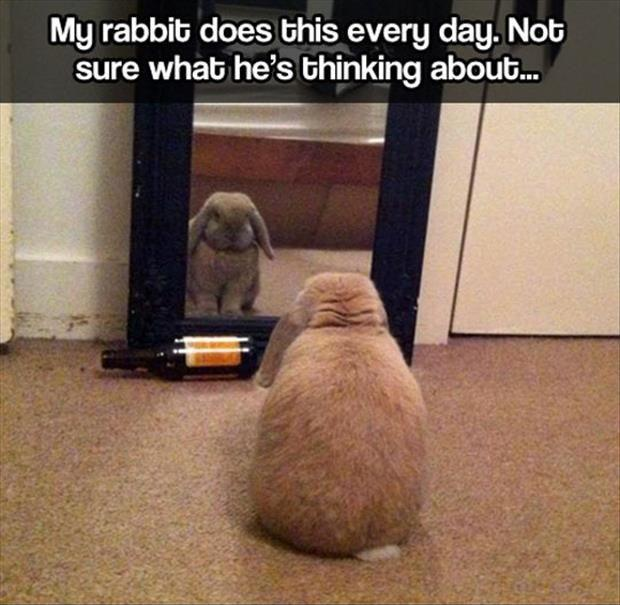 My rabbit does this every day. Not sure what he's thinking Picture Quote #1